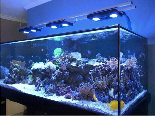 maintenance of a marine aquarium With over 25 years of experience, we are experts in aquarium cleaning, design, installation, and maintenance.