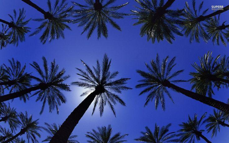 Palm Trees Sunset HD desktop wallpaper Widescreen High