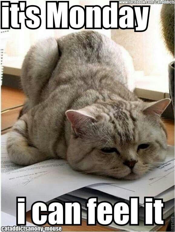 It's Monday, I can feel it! #MondayFunday