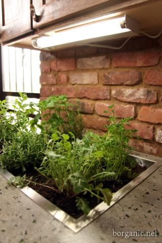 Love this!  She cut a hole in her concrete counter top and installed a basin with gravel and organic soil, then planted her herbs and lettuce right in the kitchen where she could get to them easily! b. organic