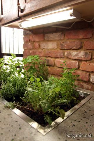 DIY Kitchen Countertop Garden - Love this idea! A basin was installed ...