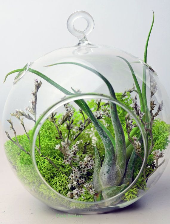 Air Plant Terrarium - Hanging Glass Orb - green reindeer moss - dried flowers - Home and Garden -  Green Gift