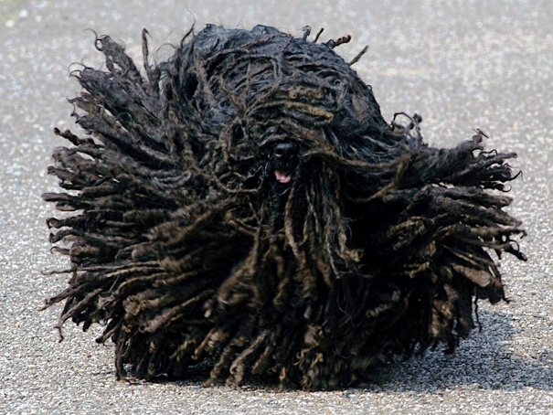 This is a dog. I promise: Pets, Hair
