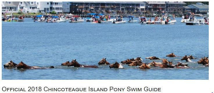 Plan ahead for your visit to the 93rd Annual Chincoteague Pony Swim... #oceancitycool