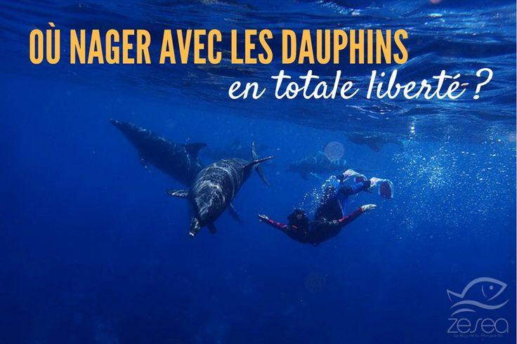 Nager avec les dauphins est une expérience inoubliable, un rêve pour beaucoup depuis le plus jeune âge.Voici les meilleurs endroits pour les rencontrer !