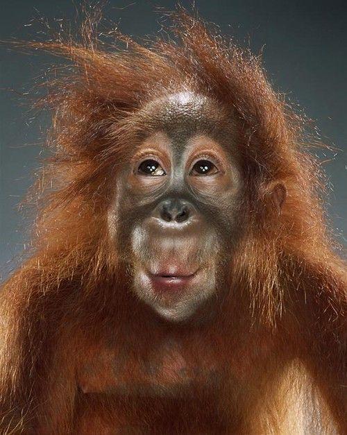 Портреты обезьян Джилл Гринберг | Fresher - Лучшее из Рунета за день