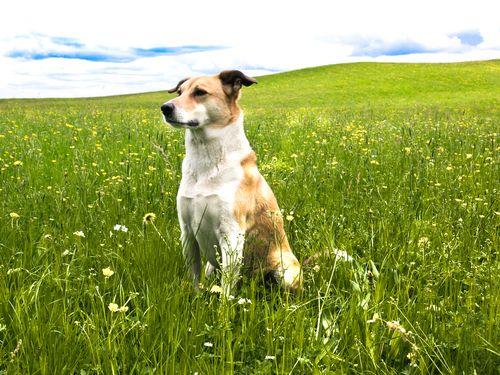 Psicologia canina .... Spesso accade chechi ha un cane ignori le basi della psicologia canina.Per questo motivo, oggi vi illustreremo le sei basi della psicologia dei cani