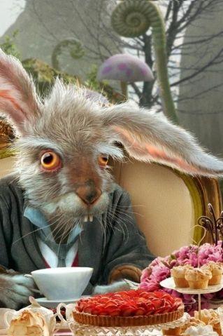 Кролики, зайчики...