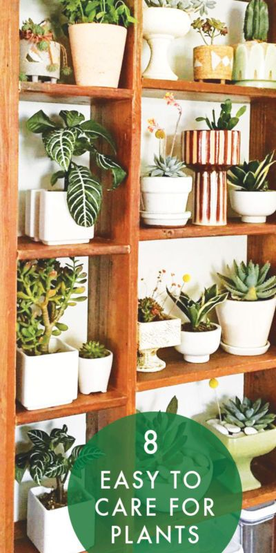 133 best plants on pink images on pinterest green plants plants and colors - Easy to take care of indoor plants ...