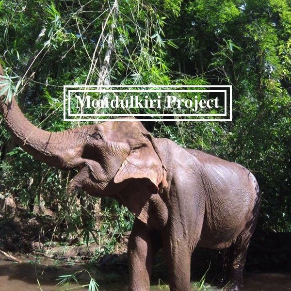 Complete guide to The Mondulkiri Project