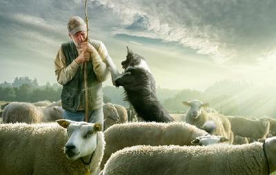 Deze herder is in slaap gevallen bij het tellen van zijn schapen.