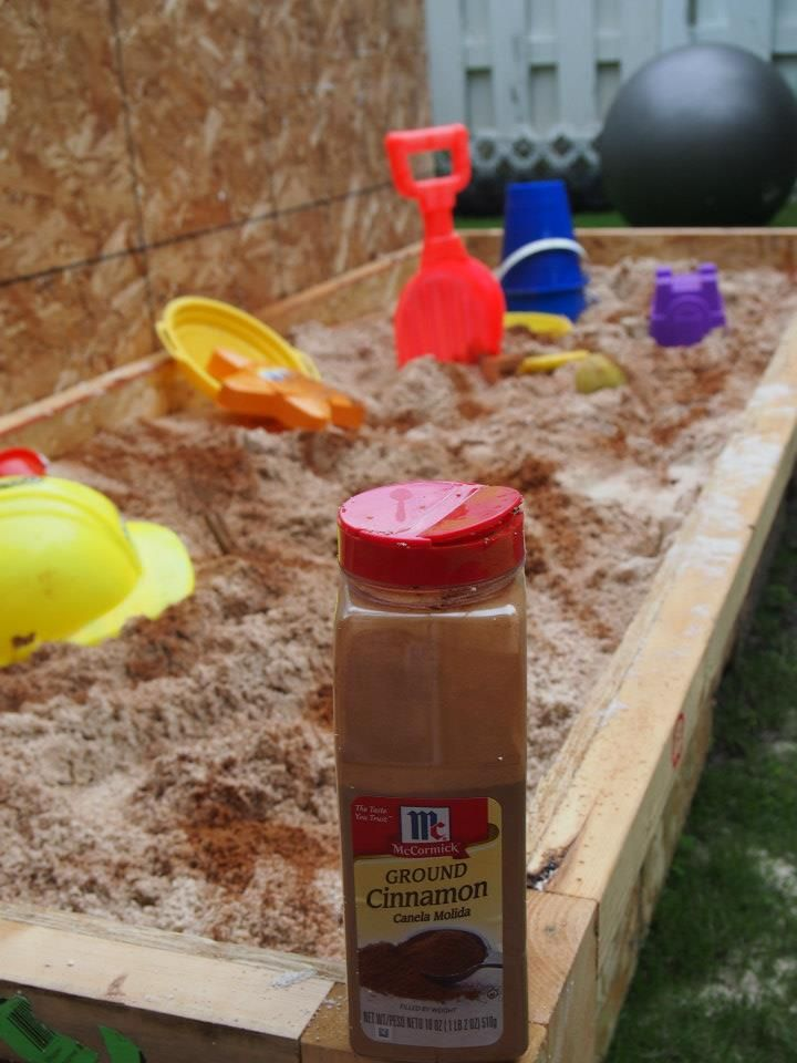 sprinkle cinnamon in sandbox to help keep bugs, worms and CATS away from the sandbox