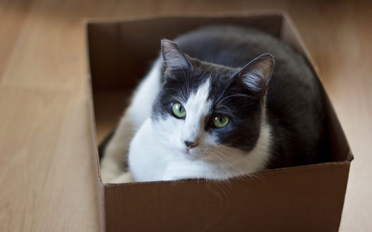 We don't need to buy cardboard boxes for whatever we are doing, and on the flipside of that, there are plenty of old cardboard boxes available with which to do things.