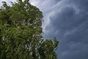 В Тамбовской области возможно усиление ветра и грозы.  В Тамбовской области возможно ухудшение погоды с усилением ветра и грозами. По данным Тамбовского ЦГМС 2 июля ожидается переменная облачность. Днем дожди пройдут в отдельных районах. Местами грозы. Ветер юго-западный 6-11 м/сместами при грозе порывы до 15-20 м/с.Температура воздуха ночью 14-19 днем 23-28.  Во время непогоды есть вероятность повреждения линий электропередач частичный повал деревьев повреждение широкоформатных и слабо…