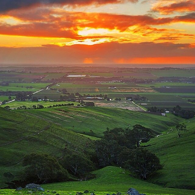 Nice shot of the sun setting in the Barossa Valley by laurenepbath