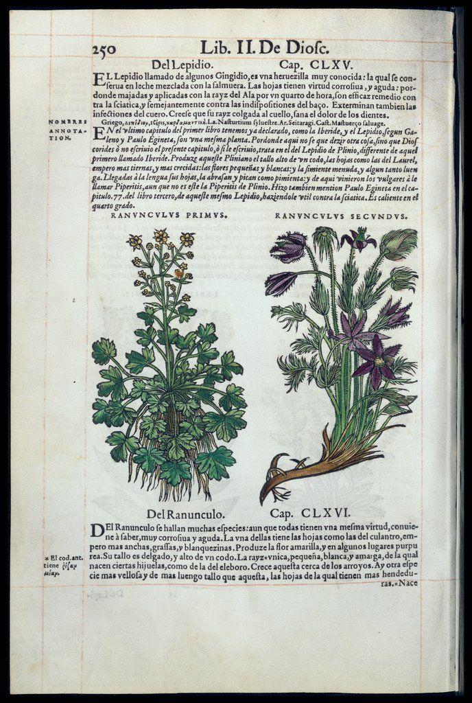 """""""De Materia Medica"""" por Dioscórides — Visualizador — Biblioteca Digital Mundial"""