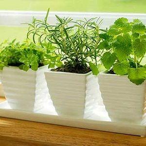 Grow a Winter Herb Garden