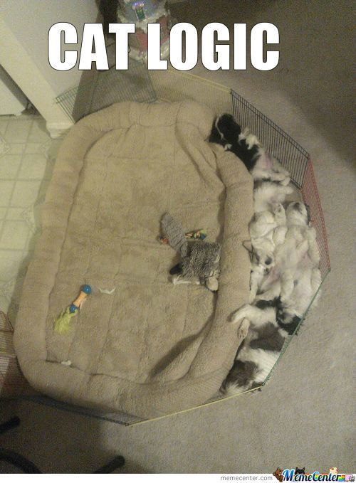 Top 25 Hilarious and Unforgettable Cat Memes to Start Your New Year!   Shelter Cats and Kittens