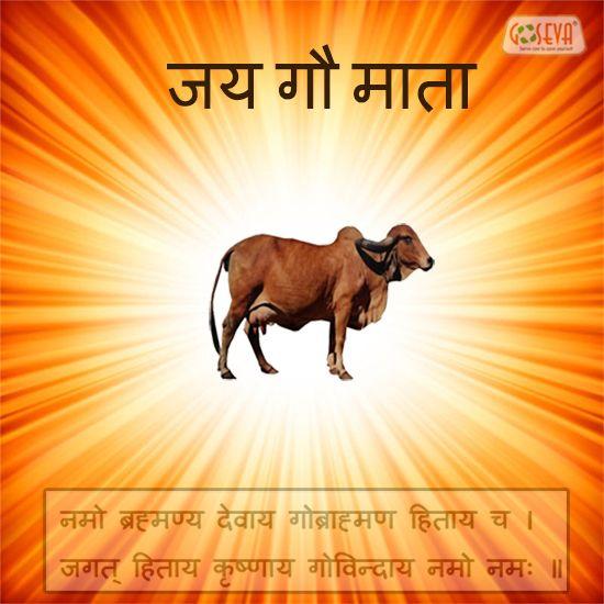 Namo Brahmanya Devay GauBrahmanya Hitaya Cha Jagat Hitay Krishnaya Govindaya Namo Namah.  - Jai Gau Mata  -GoSeva