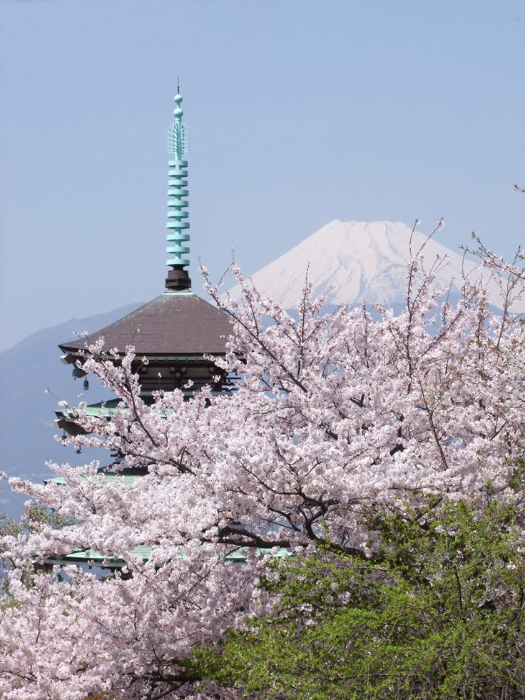Cherry Blossoms and Mt. Fuji viewed from Lake Kawaguchi