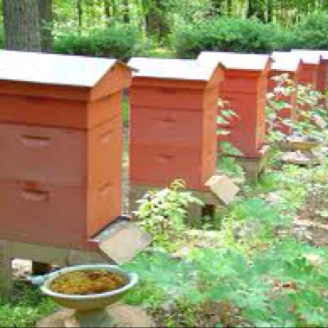 Bee Hives   A Home For Honey Bees
