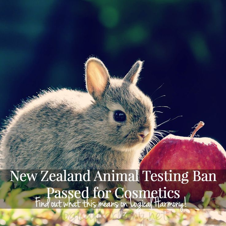 Changes have been made to the New Zealand animal testing laws. Find out what these changes are and what they mean for the cosmetics industry on Logical Harmony! #veganbeauty #logicalharmony