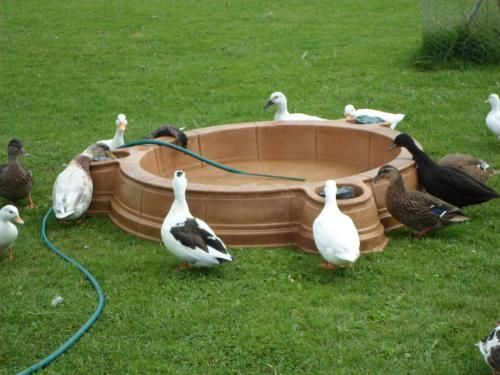 duck coops for sale google search and then there are