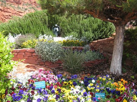 Container Gardening In Arizona   Bing Images