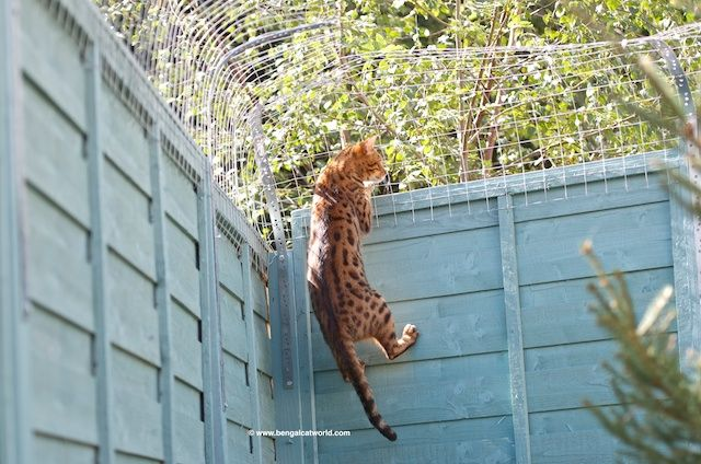 Image result for how to keep stray cats out of your yard ...