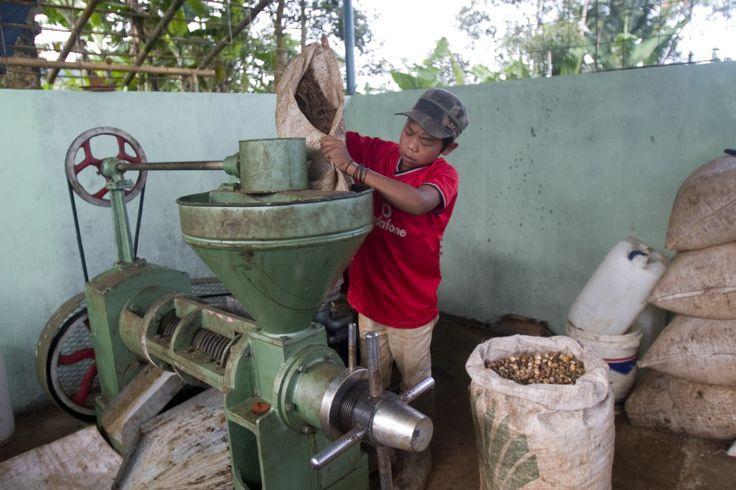Indonesië - Biobrandstof heeft de toekomst. Zegt men. Iedereen heeft het erover hoe je van allerlei zaden en planten benzine kunt maken. In het Indonesische dorp Sukajadi zijn de boeren alvast begonnen. De dertienjarige Bram helpt hard mee.