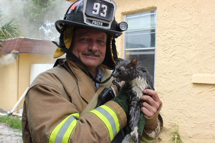 Firefighters are real heroes!!!  Nena, the cat, receives oxygen through Palm Beach County Fire Rescue's pet mask after she was pulled out of a burning, Lake Worth home, gasping for air on Tuesday afternoon.