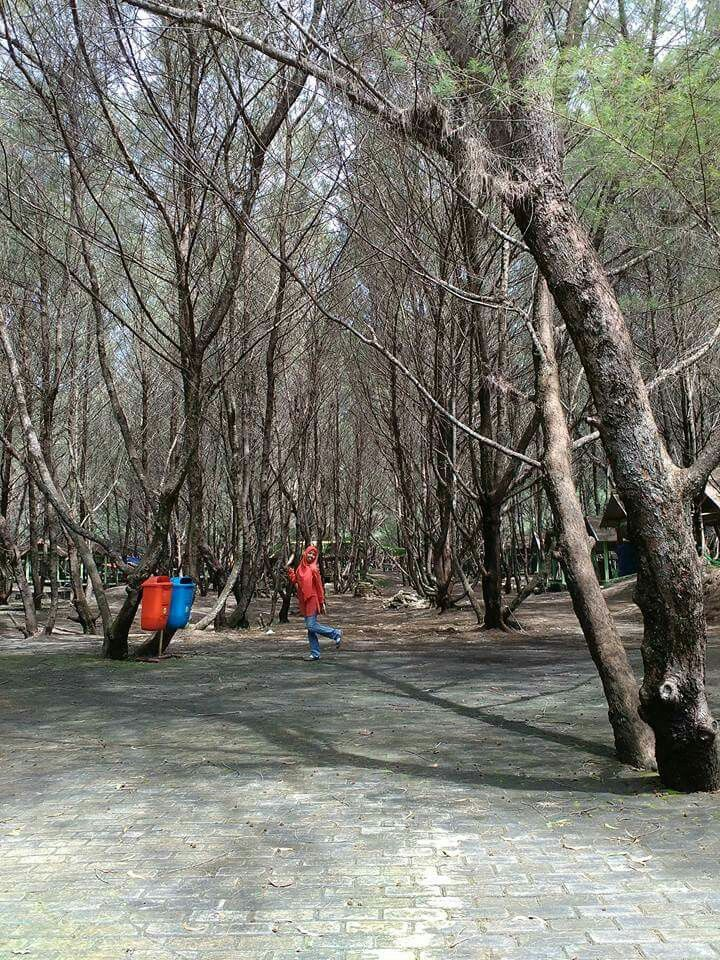 hutan cemara
