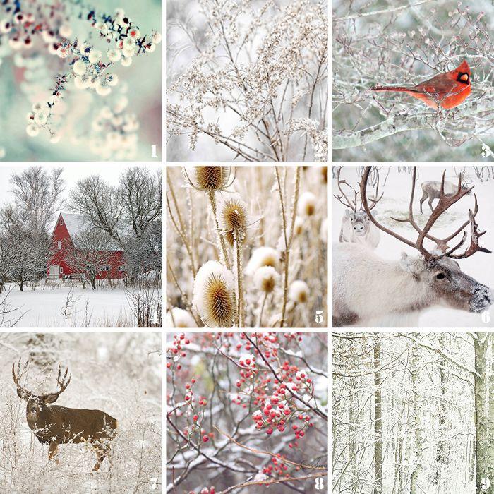 Коллаж зима картинки