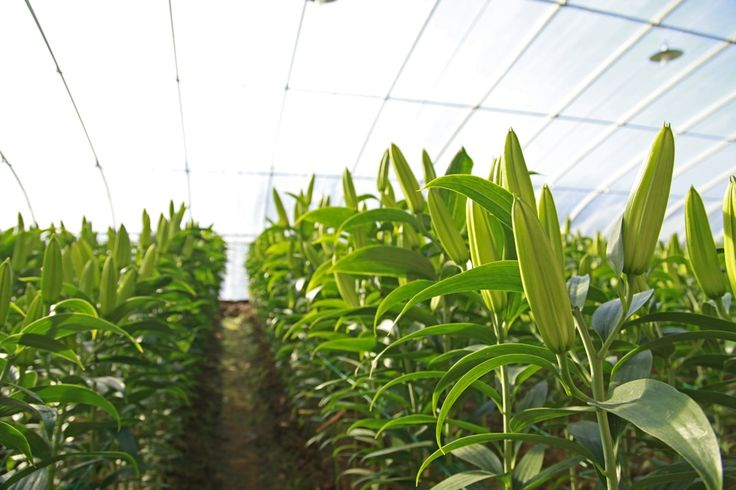 Sri Lanka has signed a US$125 million credit with the World Bank to help the country modernize its agriculture sector.