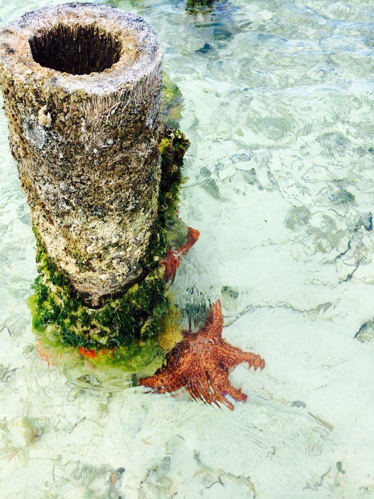 Stella marina in acqua cristallina