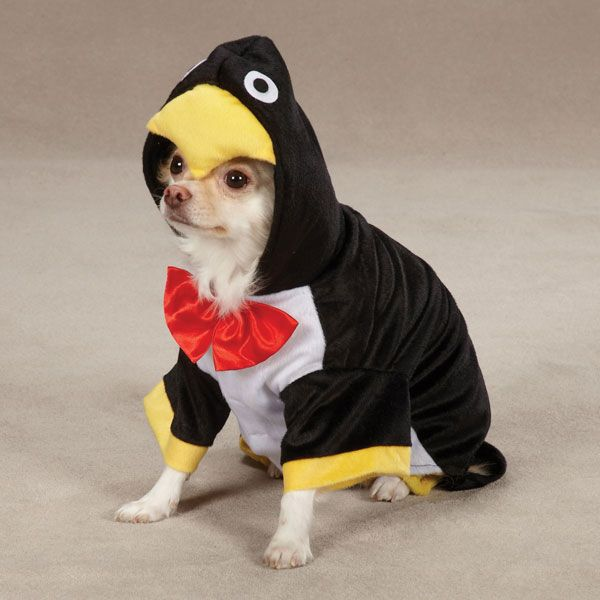 Penguin Pup Dog Halloween Costume...lol...there are no words. Maybe for Cody?