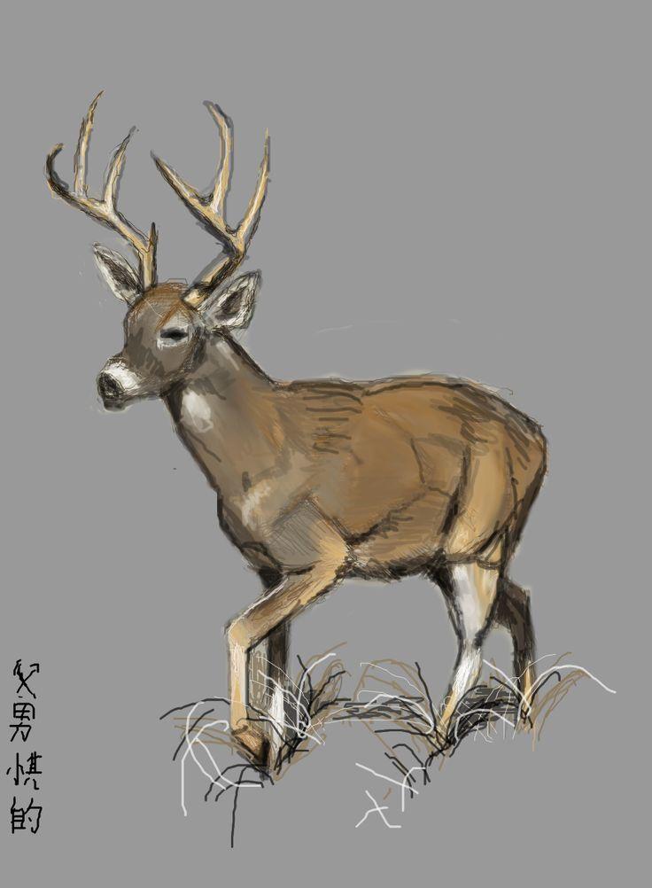 1000 images about deer sketches on pinterest deer