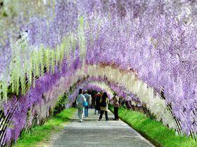 日本の絶景が凄い!GWに行きたいお出かけスポット24選
