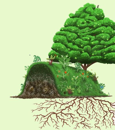 raised garden beds hugelkultur twenty years in - extra rotty, extra lush