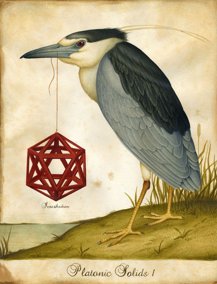 platonic solids - lindsey carr: Artists, Platonic Solid, Watercolor Paintings, Lindsey Carr, Illustrations, Sacred Geometry, Tattoo Design, Lindsay Carr, Birds