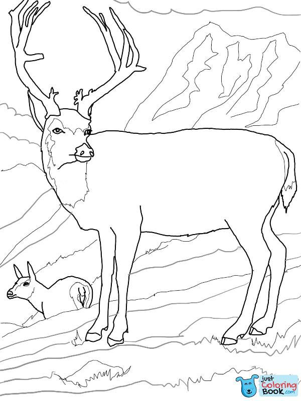 Free Download Printable Mule Deers Family Coloring Pages With