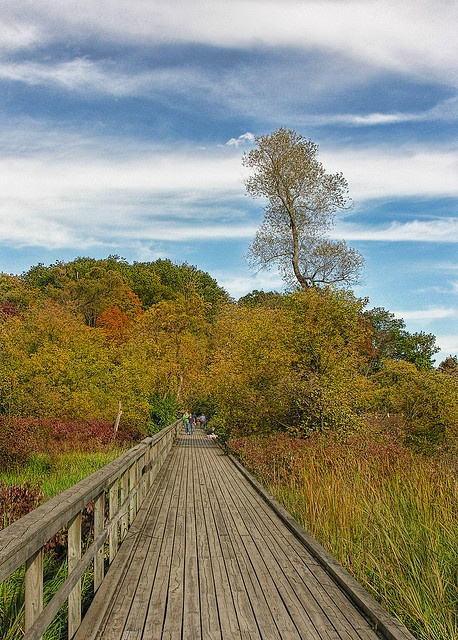 Royal Botanical Gardens, Burlington. Boardwalk over the Marsh - DSCN1769 ep by Eric Parker, via Flickr.