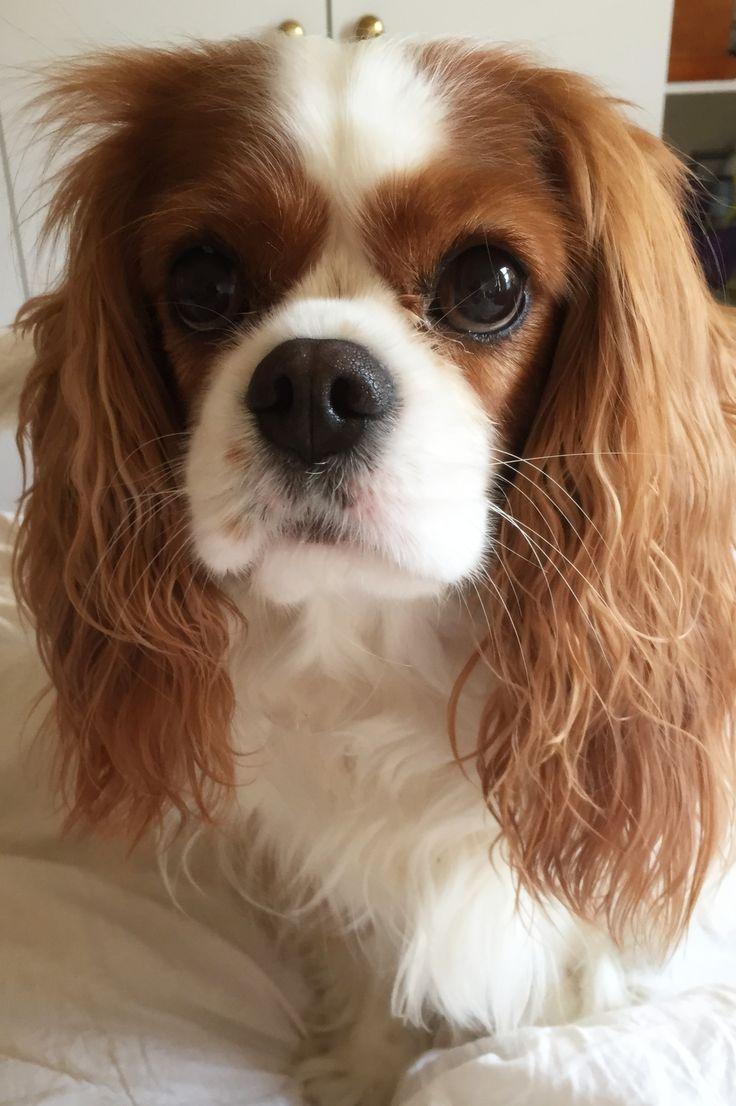 Esa Dog Most Affectionate Dog Breeds For Emotional Support