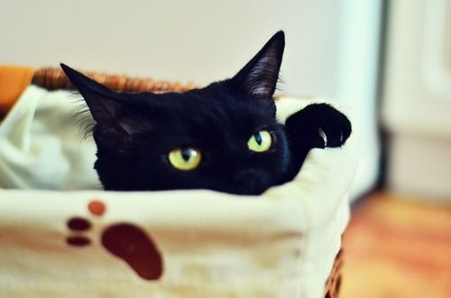 Beautiful with just a hint of evil. Black cats are the absolute best.