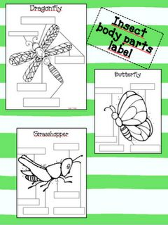 Insect- Body Parts Label