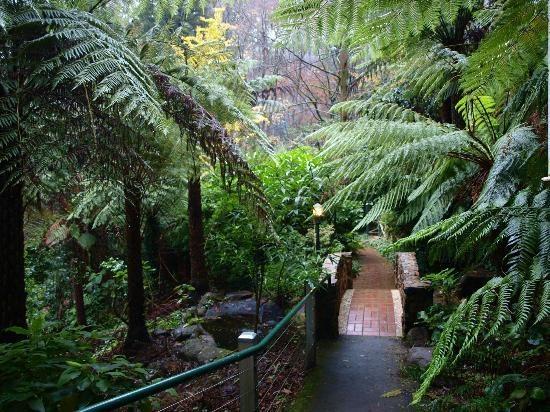 Dandenong Ranges: Victoria Australia. Stunning scenery