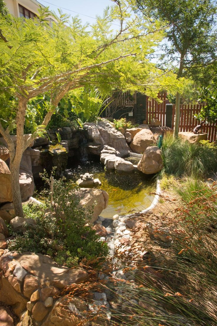 Rock pool or Swim pond with perfectly clean water. Natural biological filtration system.