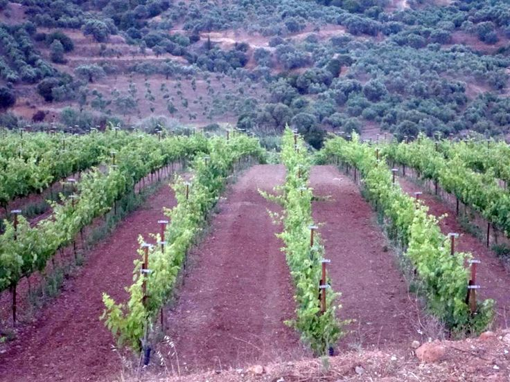 Monemvasia Winery, Peloponnese