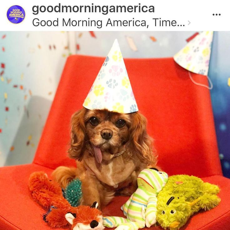 Happy Birthday to all rescue pups today, Dogust 1st 🎂 My fellow rescue pup sisters and I will be protesting tonight. Will you be there? NYC needs to join Boston, DC, Los Angeles and Chicago in the list of cities who have banned pet stores!! #stoppuppymills