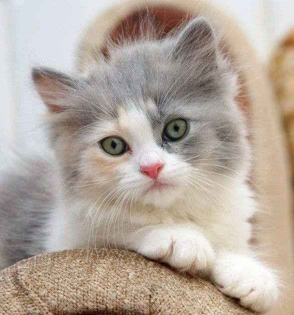 100 Photos Proving That Cats Are The Cutest Animal On Earth Cutest Animals On Earth Cute Cats Cute Cats And Kittens